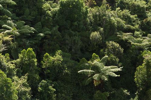 Neuseelands Pflanzen (Farn)
