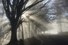The Cotswold Way - Highly Commended: Landscape Photographer Of The Year 2014, Classic View (Russ Barnes Photography) Tags: autumn trees mist fall silhouette fog sunrise dawn nikon cotswolds diffused russbarnes d800e sigma35mm14art