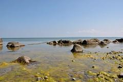 (kaktus83) Tags: strand meer urlaub steine rgen ostsee