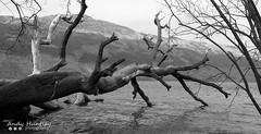 Loch Lomond (ahuntley2) Tags: travel trees blackandwhite plants lake mountains tree tourism nature monochrome beauty scotland blackwhite natural lakes shore lochlomond lochs attractions blackandwhitephotography travelphotography