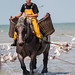 "2015_08_07_Paardenvissers_Oostduinkerke-51 • <a style=""font-size:0.8em;"" href=""http://www.flickr.com/photos/100070713@N08/20395496002/"" target=""_blank"">View on Flickr</a>"