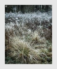 Shade (Stuart Leche) Tags: frost frosty grass landscape morning nature rural stuartleche undergrowth winter woodland woods wwwstuartlechephotography