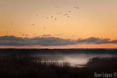 Volando al amanecer (Iban Lopez (pepito.grillo)) Tags: d90 naturaleza nature amanecer dawn fog niebla ©ibanlópez lagunasdelrasodeportillo