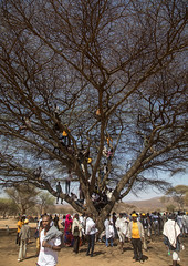 People sit in a tree during the Gada system ceremony in Borana tribe, Oromia, Yabelo, Ethiopia (Eric Lafforgue) Tags: africa badhaasa boran borana borena colourpicture culturalheritage day eastafrica ethiopia ethiopia0317386 gaada gada gadasystem gadaa groupofpeople hornofafrica mixedagerange oromia oromiya oromo oromya outdoors spectator traditionalculture tree tribalculture unesco vertical viewing watching yabello yabelo et