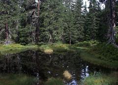 06-IMG_8393 (hemingwayfoto) Tags: österreich austria baum europa fichte hochmoor hohetauern landschaft moorauge nationalpark natur naturschutzgebiet rauris rauriserurwald reise tannenbaum urwald wald