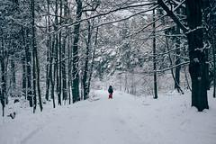 Schneewanderung (MartinWauryFotografie) Tags: photography fotografie vsco bäume dresden dresdenerheide fuji heide kind schlitten schnee tochter wald winter xt1