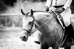 Horse Show (JustJamieLeigh) Tags: horse horses horseshow horseback horsebackriding show riding canon60d canon 60d competition equestrian english englishriding equines equine blackandwhite monochrome