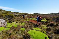 20170228-05-Cushion plants (Roger T Wong) Tags: australia centralplateauconservationarea greatpinetier np nationalpark sel1635z sony1635 sonya7ii sonyalpha7ii sonyfe1635mmf4zaosscarlzeissvariotessart sonyilce7m2 tasmania wha wallsofjerusalem worldheritagearea bushwalk camp centralhighlands cusionplants hike hikers trektramp walk