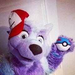 Today it's #pokemonday ^-^ Hope you all gotta catch them x3 #furry #pokemongo #pokemon #fluffy #pokeball #ashketchum #fluffball #masterball #pgo (Keenora Fluffball) Tags: keenora fursuit furry kee