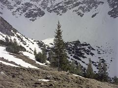 100MB JPEG Tree (zoltannagel) Tags: mamiya 645 super sekor c 110mm f28 kodak vericolor 160 medium format film tetenal colortec c41 epson v600 nature tree 100mb jpeg wandern wanderlust mamiyaglass forest mountains snow
