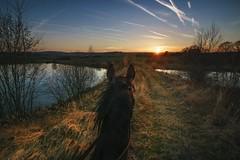 In the saddle (frantiekl) Tags: ride riding landscape horse sun sunset sky water nature serene harmony light spring dusk sunny bohemia sunlight