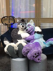 Super comfy :3 I've had a wonderful time at NordicFuzzCon 2017 - Japan: Samurai or Super Kawaii? and I hope, for the people who has been there as well, that you've had a good time, too! :3 It was so cool to see so many people again! ^-^ Thankees to Arco F (Keenora Fluffball) Tags: keenora fursuit furry kee