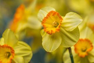 Happy Spring !