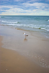 beach 14 (Hey_Lee! Photography) Tags: ocean new sea summer seagulls beach water seaside sand waves nj jersey