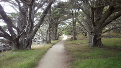 Cypress Grove trail (rhyang) Tags: hiking centralcaliforniacoast pointlobosstatereserve