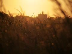 A Warkworth Dream (Amble180) Tags: wild lumix panasonic northumberland about g3 45200