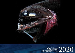 Ocean Exploration 2020: Deep-sea Fish