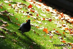 (yazeed_12) Tags: barcelona tree bird nature canon view uploaded:by=flickrmobile flickriosapp:filter=nofilter