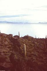 Alien Landscape (JF Sebastian) Tags: cactus mountain rock landscape island bolivia scannedslide uyuni saltflat rutaquetzal incahuasi digitalized morethan100visits morethan250visits rutaquetzal1996 oldfilmautomaticcamera