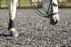 Equine (AmyyJG) Tags: horses horse animal animals closeup canon action artsy hoof equestrian canter equine horseriding hooves schooling horserider cantering equinephotography equestrianphotography canon550d ajgphotography