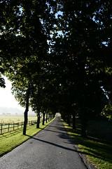 Avenue (@lattefarsan) Tags: mist tree landscape countryside nikon sweden avenue landskap dimma all d5200