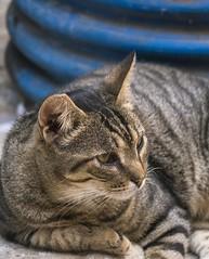 P1010780_NG (just_me78) Tags: portrait cats nature animals cat tiere natur katze katzen