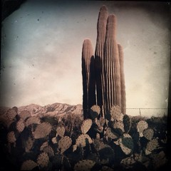 (K e v i n) Tags: arizona cactus southwest nature cacti outside outdoors az dirtroad pricklypear barbedwirefence sonorandesert saguaros marana santacatalinamountains southernarizona hipstamatic tejaslens oggl ctypeplatefilm