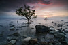 Little Ent (bunadski) Tags: seascape sunrise island rocks mangrove siquijor naturepoetry alwaysexcellent