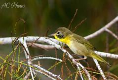 ... (ac4photos.) Tags: bird nature animal nikon florida wildlife swamp wetlands everglades marsh ac naturephotography glades animalphotography birdphotography wildlifephotography 2894 d300s ac4photos