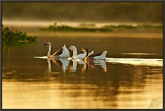 Armand Bayou paddlers (WanaM3) Tags: park nature water birds sunrise golden morninglight geese texas wildlife sony bayou pasadena canoeing paddling a77 bayareapark armandbayou sonya77 wanam3