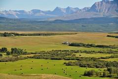 Alberta Foothills (Stella Blu) Tags: foothills rural landscape albertacanada bigmomma moun nikkor18200 stellablu challengeyouwinner nikond5000 gamex2winner storybookwinner pregamesweepwinner gamesweepwinner pregameduelsweepwinner picmonkey:app=editor