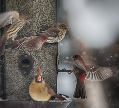 group activity (nosha) Tags: usa winter beautiful beauty bird birdb