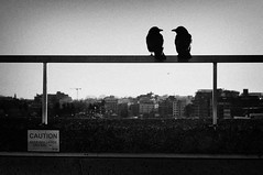 Say something, I'm giving up on you (. Jianwei .) Tags: street city light urban bird silhouette vancouver downtown mood geometry sony caution crow jianwei kemily