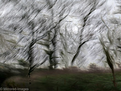 Blowing a Hoolie (Mirrored-Images) Tags: trees winter blur landscape movement multipleexposure layers northyorkshire icm intentionalcameramovement canong16