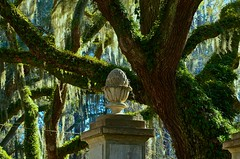 Resurrection Fern and Spanish Moss - Wormsloe Plantation - Savannah GA (Meridith112) Tags: trees light fern tree urn ga georgia moss nikon gate shadows estate ivy civilwar plantation spanishmoss sav