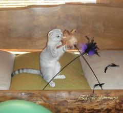 Jugetes para gatos. Plumeras para gatos. (glamourdivinecattery) Tags: ratones plumeros juguetesparagatos juguetesparaamos