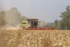 IMG_7799 (phil.photographie) Tags: big harvest tt allier xxl claas lexion 770tt 1050v