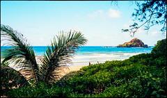 View Through The Foliage (greenschist) Tags: usa film analog island hawaii maui palmtree kokibeach pacifcocean zeissikonzm kodakektar100 zeissbiogon35mmf20tzm