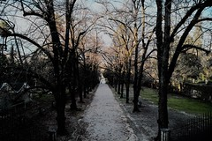 Luz de Atardecer (ameliapardo) Tags: atardeceres crepusculo parque jardines naturaleza arboles airelibre jardinbotanico