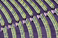L.O.N.E.L.Y (W_von_S) Tags: olympiastadion olympicstadium munich münchen bavaria bayern a700 sony abstrakt abstract minimalism minimalismus minimalistisch pattern muster sitze sitzreihe simplicity lines curves lonely seats wvons werner 2016 einsam germany deutschland