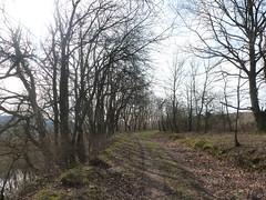 P1030127 (Unterwegs im Trierer Land) Tags: kanzem wiltingen saarbogen