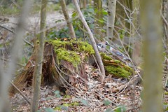 Eichelhäher - garrulus glandarius (krueesch) Tags: rabenvogel bird vogel häher eurasianjay garrulusgandarius eichelhäher birds jay