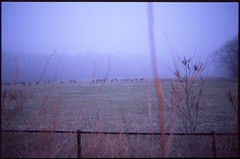 (bensn) Tags: longexposure mist film field fog dark evening pentax slide deer f18 limited provia fa lx 31mm 400x