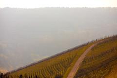IMG_5077 (Photocreatief.de) Tags: wandern badenwrttemberg sddeutschland weinberge beutelsbach waiblingen endersbach weinstadt remsmurrkreis schnait remshalten
