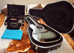 Guitar Harps (Pacdog) Tags:
