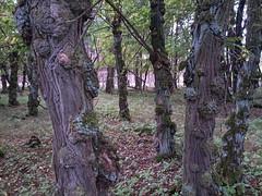 2013-09-01 12.29.58.jpg