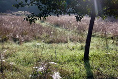 Morning (Zandgaby) Tags: morning flowers shadow sun tree nature grass outside early droplets glare spiderweb foggy meadow dew dreamy waterdrops sunbeam glistering webcobs