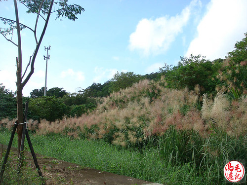 山水綠生態公園 (12).jpg