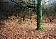 November forest (Marie Granelli) Tags: november autumn tree nature skne sweden explore sdersltt d3000