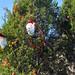 Trees_of_Loop_360_2013_248